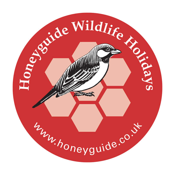 Honeyguide car sticker
