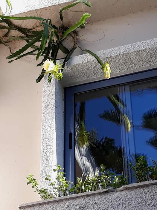 Hotel Sofia cactus