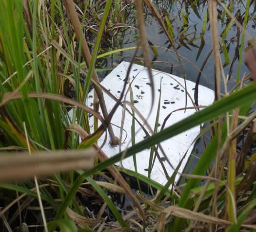 water vole platform