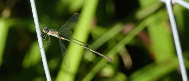 willow emerald on wire